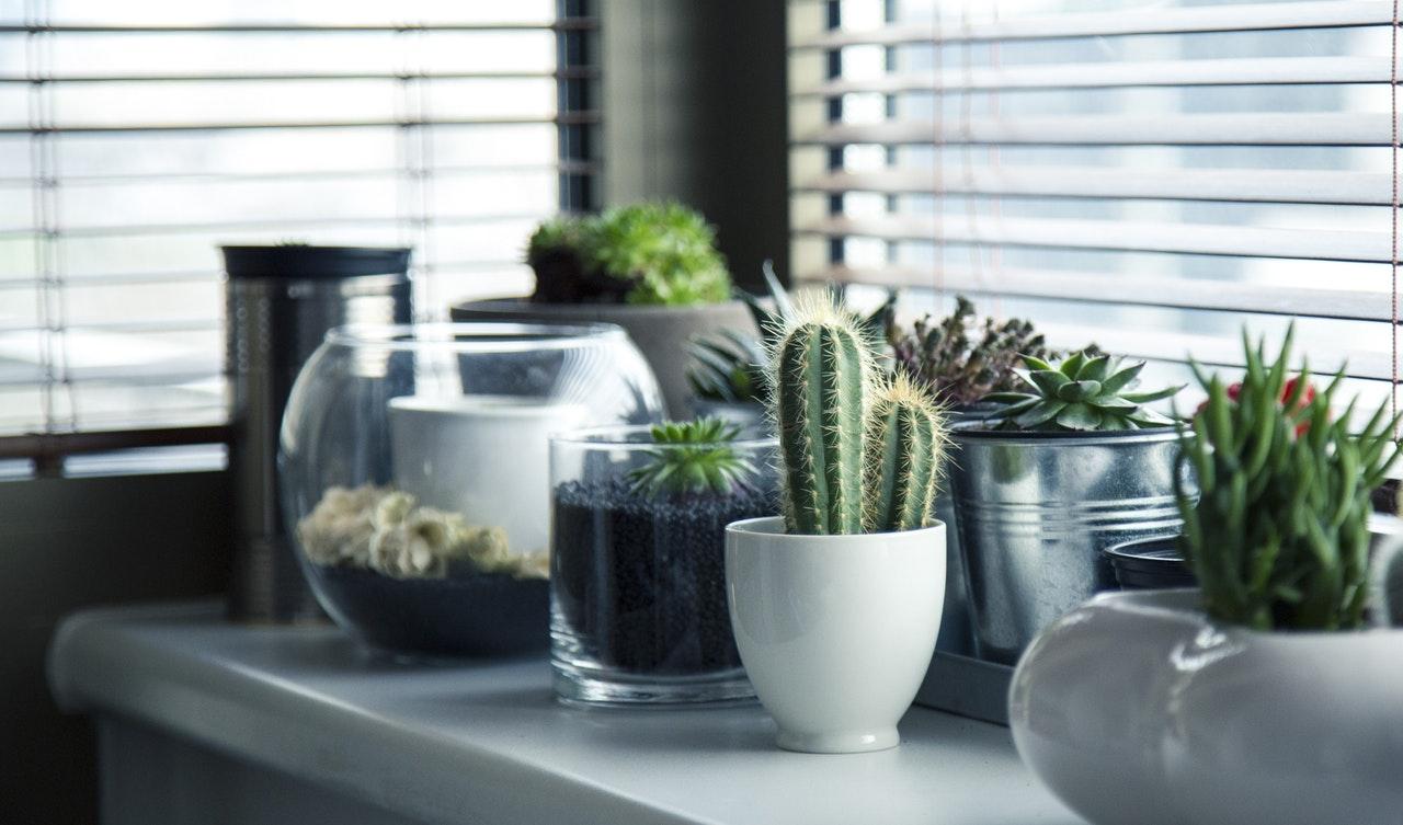 Domowe rośliny oczyszczające powietrze – te kwiatki warto mieć w domu
